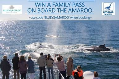 Competition: win Family Tickets for a whale watching cruise on the Amaroo valued at $198!
